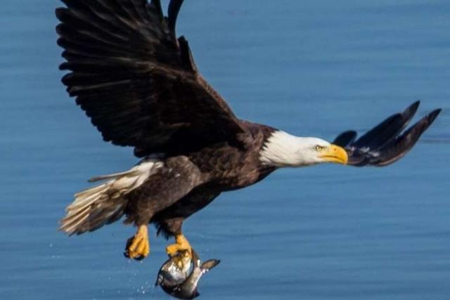 Неймовірної краси фото птахів, зроблені талановитим пожежником зі США