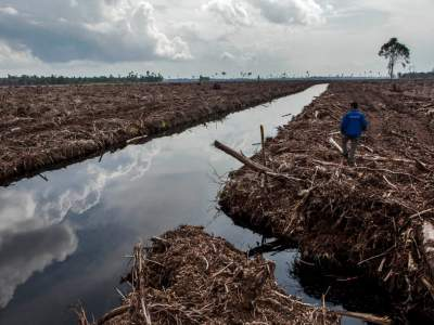 Фотограф показал, как люди изменили леса мира. Фото