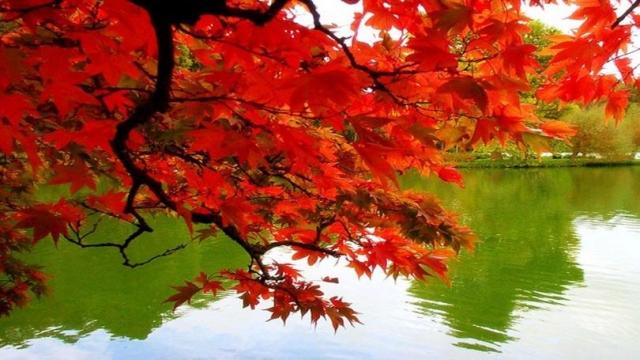 Обои - Природа. Разноцветная осень