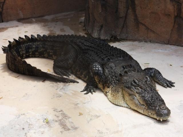 Фото: Экзотические животные, которых приютили в доме (Фото)